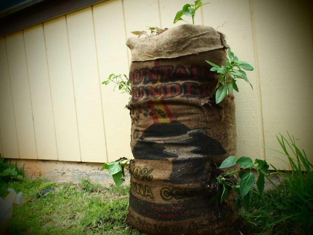 How To Make A Sack Garden Engineering For Change