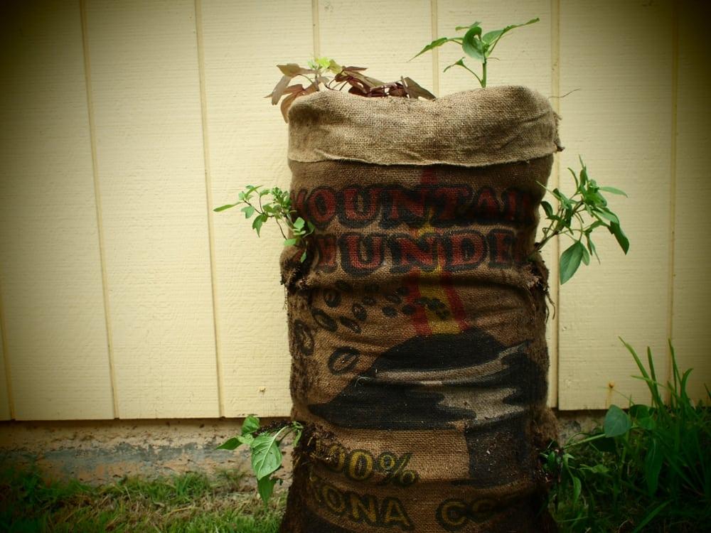 sack garden
