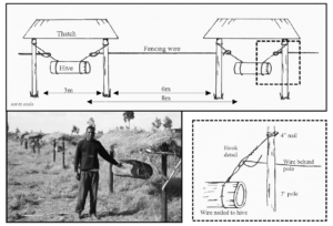 A log hive hangs from fence posts in this diagram from the Beehive Fence Construction Manual. Image courtesy of the Elephants and Bees Project