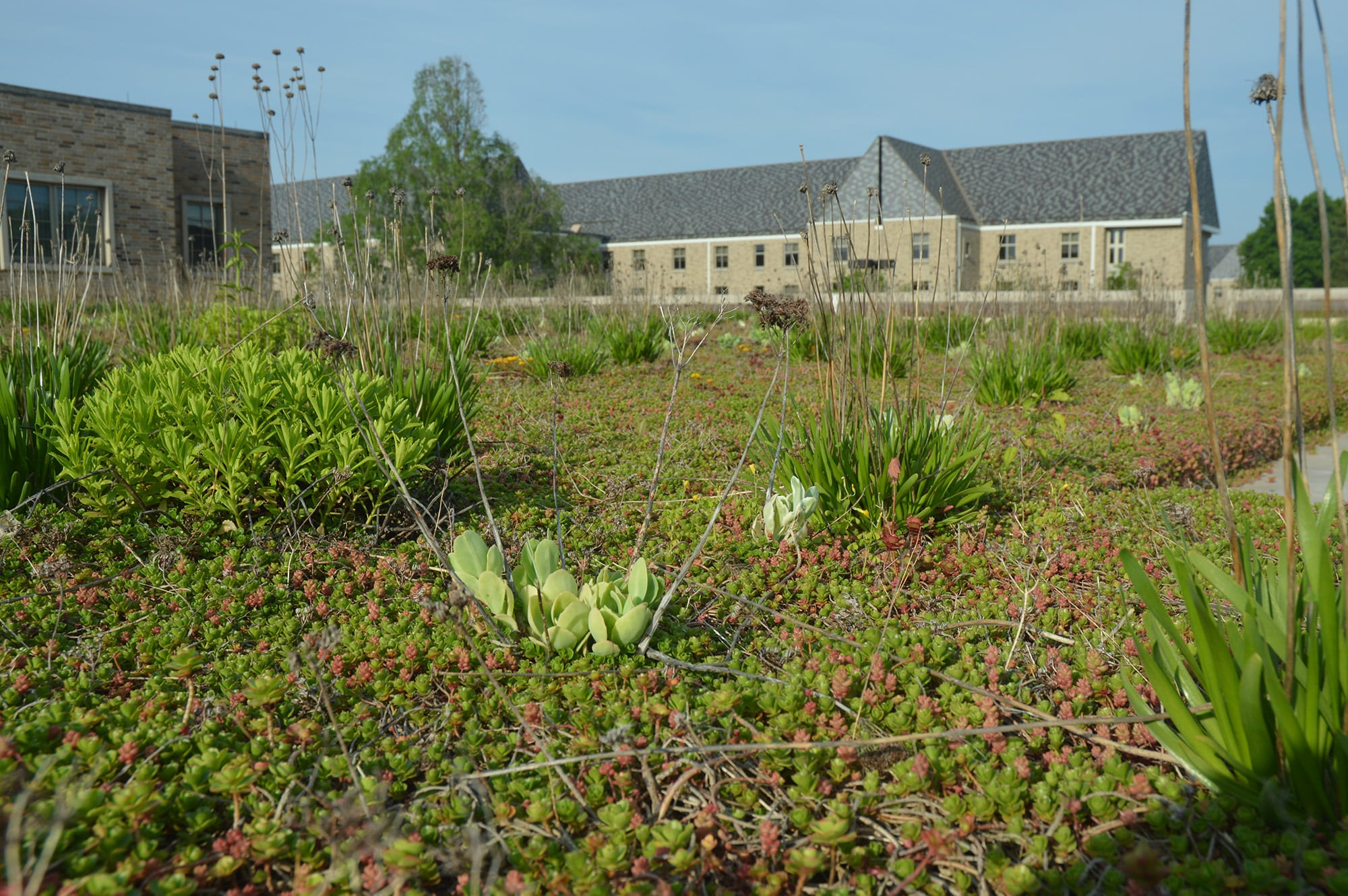 green roofs Archives   Engineering For Change